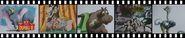 Zoom Dumbo2