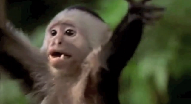 File:Littlemonkey.png