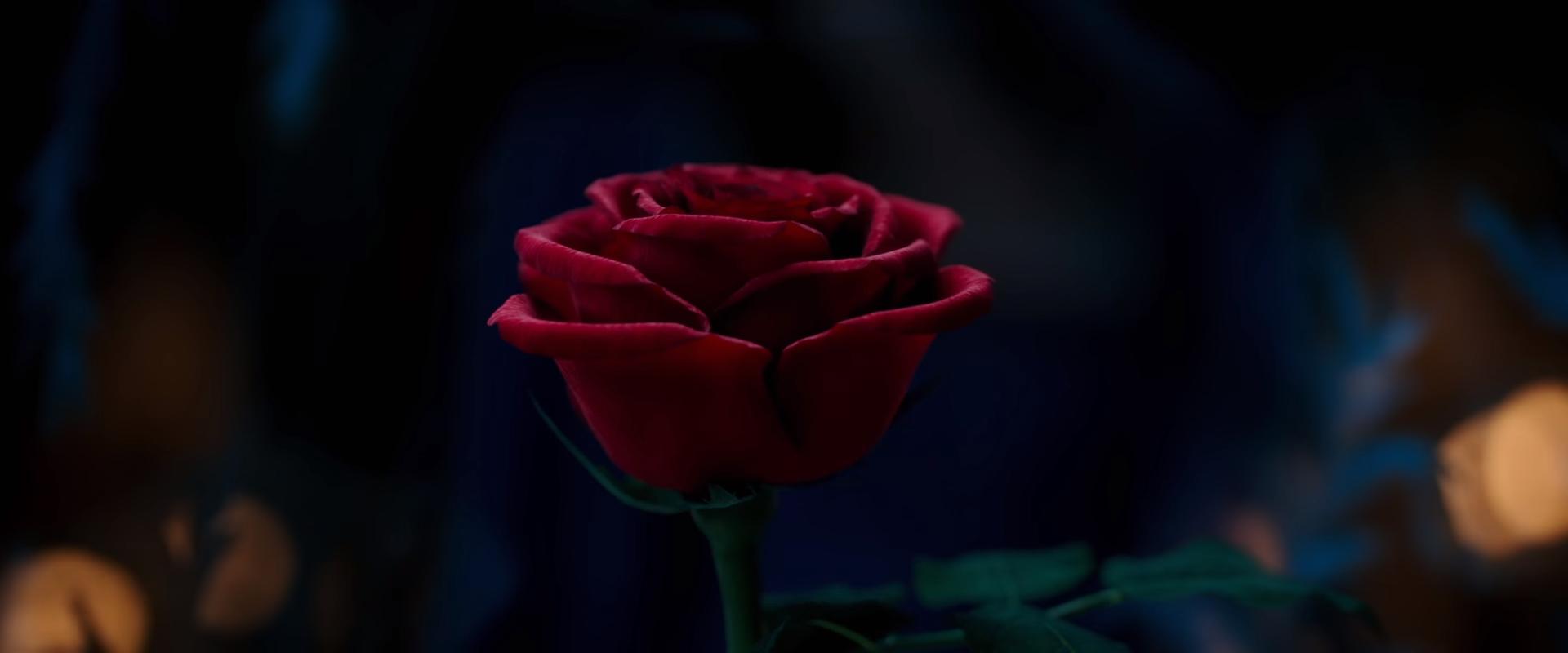 Beauty Beast Trailer on Latest Writing A Press Release