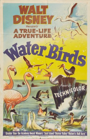 File:Water Birds FilmPoster.jpg