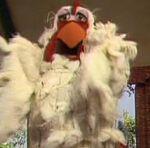 Giant chicken muppet