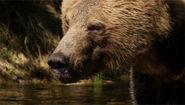 Bear-mnn 5