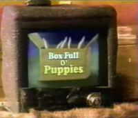 BoxFullOPuppies