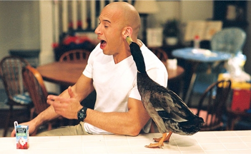 File:Shane Wolfe with Duck.jpg
