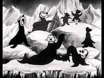 Arctic Antics seals