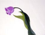 Tulip cel blog