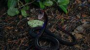Snake Devil's Due