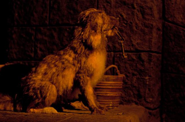 Prison Dog Disney Wiki Fandom Powered By Wikia
