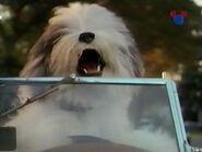 1994-chien-3