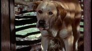 Old Yeller pic. 34