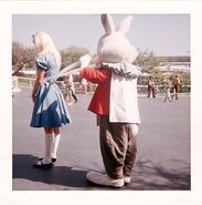 Disneyland alice and rabbit apron strings photograph 640