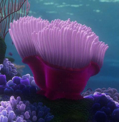La_An%C3%A9mona_(Finding_Nemo) on Finding Nemo