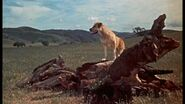 Old Yeller pic. 1