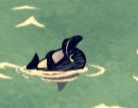 Sleeping Bottlenose Ballphin
