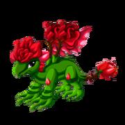 Rose Adult
