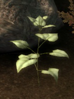File:Object-Elfroot Plant.png