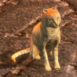 DAO Kitten - gift