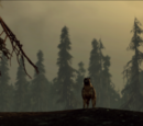 In Search of Morrigan