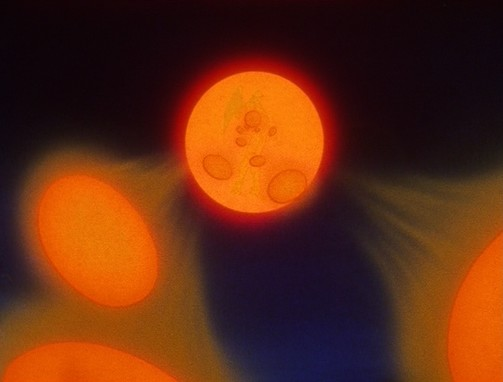 File:DragonballGT-Episode054 129.jpg