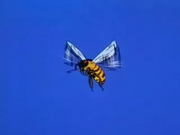YellowBee.png