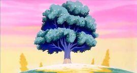 Ensenji Tree