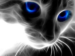 File:Magiccat.jpg