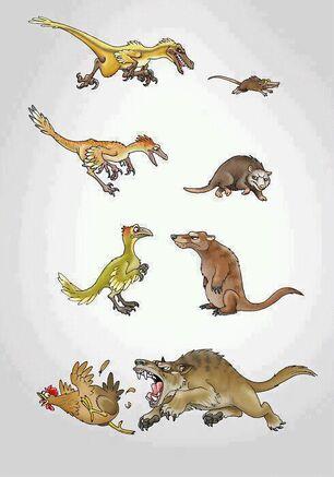 Carnivore evol