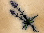 GRANSYS HERB