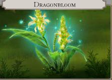 Dragonbloom flower