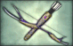 File:1-Star Weapon - Ancient Bow.png