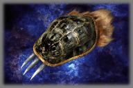 File:Beast Gauntlet (DW3).png