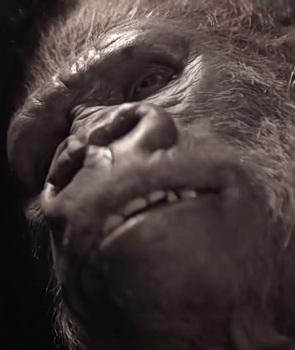 File:Gorilla Bruno.jpg