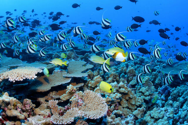 File:Nwhi - French Frigate Shoals reef - many fish.jpg