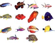 All of th efish
