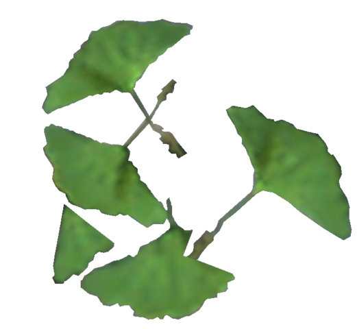 File:Ginko Leaf.png