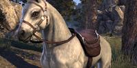 Snow (Horse)