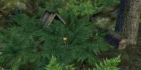 Wilderness Caches (Oblivion)