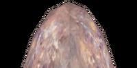 Small Kwama Egg