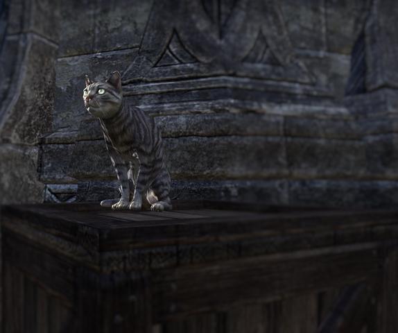 File:Azura Cat.png