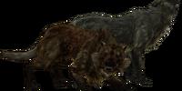 Wolf (Skyrim)