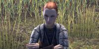 Leifunda