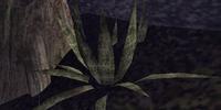 Hackle-Lo Leaf