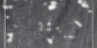 Thieves Guild (Skyrim)