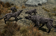 Pack of Pit Wolves
