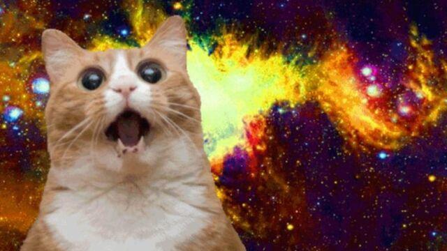 File:Narnar011cat-meow.jpg