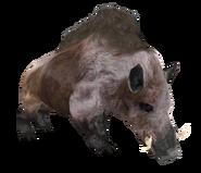 Beast Oblivian boar