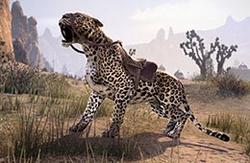 Senche-Leopard