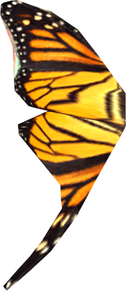 File:Butterfly wing.png