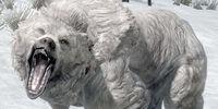 Orso delle nevi