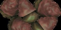 Ironwood Nut